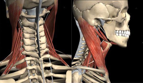 Что показывает МРТ гортани и шеи, как делают томографию гортани