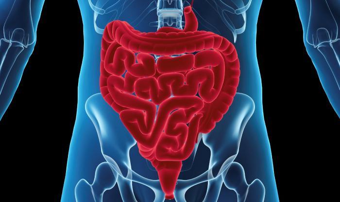МРТ кишечника и желудка: что показывает, цена, отзывы, фото